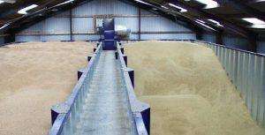 Опасное производство зерна
