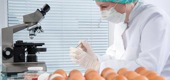 как выбрать качественное яйцо