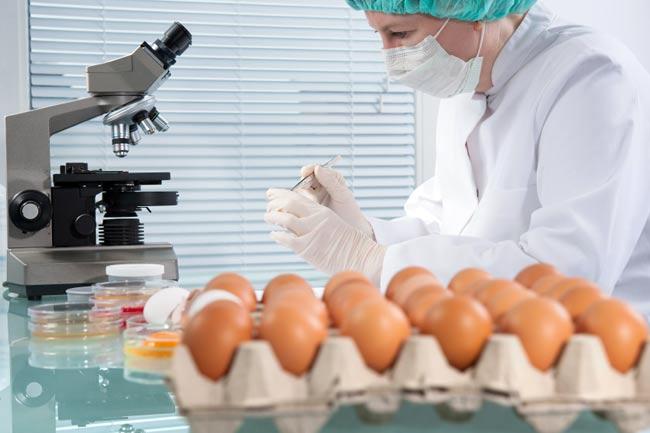 безопасность куриных яиц