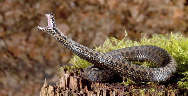 опасности от змей в лесу