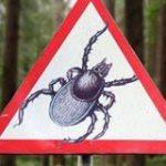 Надёжные средства защиты от клещей