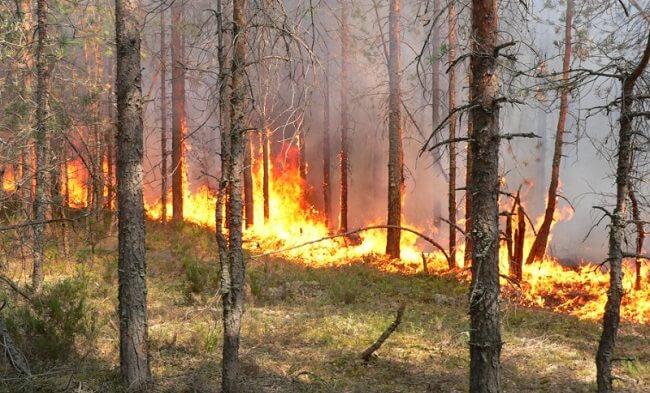 профилактика лесных пожаров