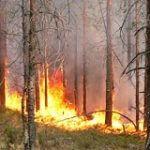 правила поведения в лесном пожаре