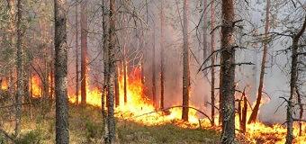 Профилактика лесных и торфяных пожаров