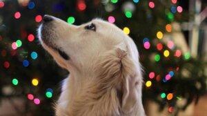 Безопасность домашних животных во время новогодних праздников